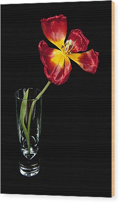 Open Red Tulip In Vase Wood Print