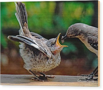 Open Wide Wood Print by Sue Melvin