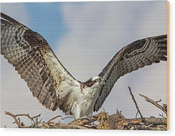 Wood Print featuring the photograph Open Wings by Robert Pilkington