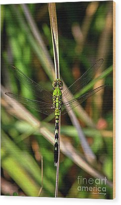 Wood Print featuring the photograph Openminded Green Dragonfly Art by Reid Callaway