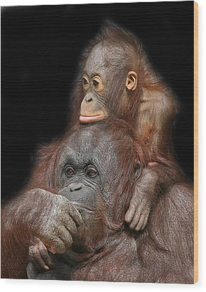 Orang-utan Mother And Baby Wood Print by Larry Linton