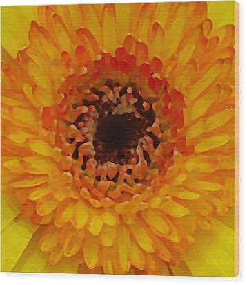 Orange And Black Gerber Center Wood Print by Amy Vangsgard
