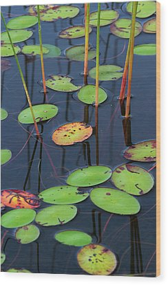 Orange And Green Water Lily Pads  Wood Print by Juergen Roth