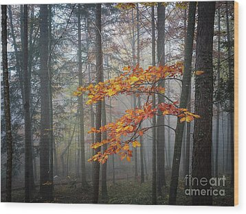 Wood Print featuring the photograph Orange And Grey by Elena Elisseeva