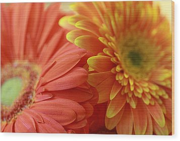 Orange And Yellow Daisies Wood Print