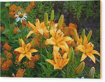 Wood Print featuring the photograph Orange Asiatic Lilies And Butterfly Weed by Kathryn Meyer
