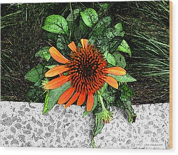 Wood Print featuring the photograph Orange At Highline Nyc by Joan  Minchak