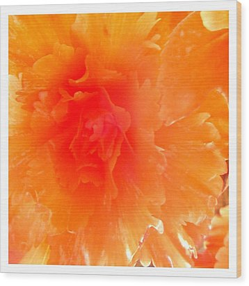 Orange Blast Wood Print by Frank Wickham