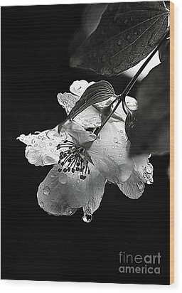 Orange Blossom Wood Print by Elaine Hunter
