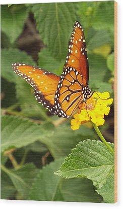 Orange Butterfly Wood Print by Judi Saunders