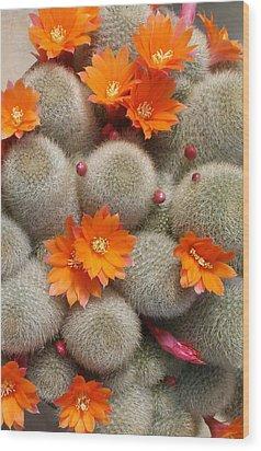 Orange Cactus Flowers Wood Print by Mark Barclay