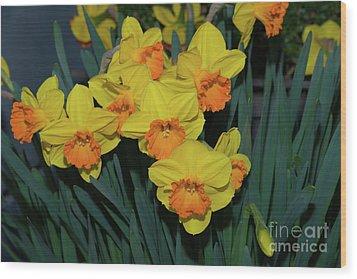 Orange-centered Daffodils Wood Print