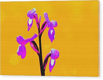 Orange Champagne Orchid Wood Print