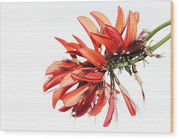 Wood Print featuring the photograph Orange Clover I by Stephen Mitchell