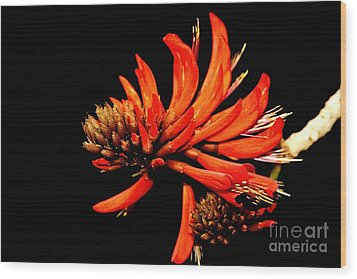 Wood Print featuring the photograph Orange Clover II by Stephen Mitchell
