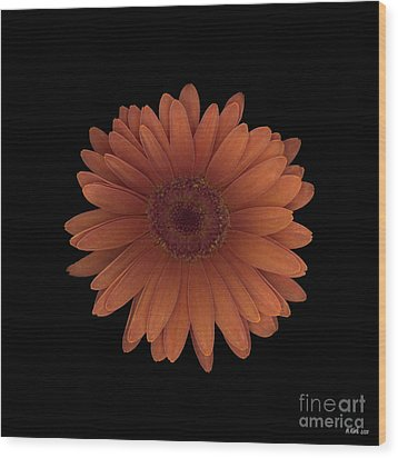Orange Daisy Front Wood Print