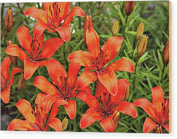 Wood Print featuring the photograph Orange Day Lillies by Mary Jo Allen