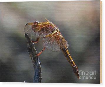 Dragonfly 1 Wood Print