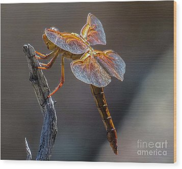 Dragonfly 2 Wood Print