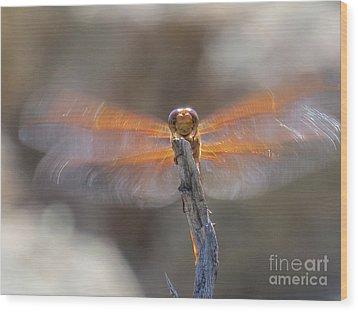 Dragonfly 4 Wood Print