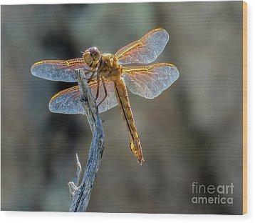 Dragonfly 6 Wood Print