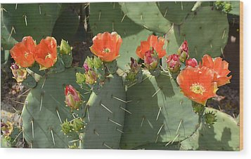 Orange Dream Cactus Wood Print