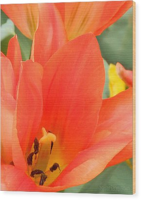 Orange Emperor Tulips Wood Print