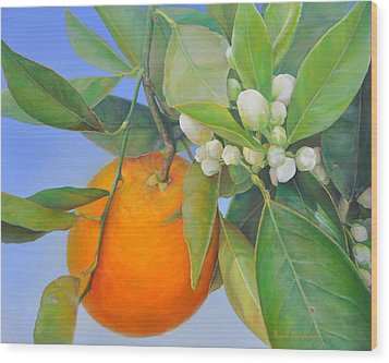 Orange En Bouton Wood Print by Muriel Dolemieux