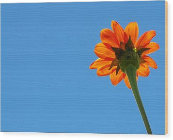 Wood Print featuring the photograph Orange Flower On Blue Sky by Debbie Karnes