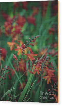 Orange Flowers 8 Wood Print