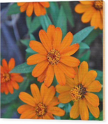 Orange Flowers Wood Print by Lori Kesten