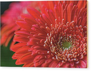 Wood Print featuring the photograph Orange Gerbera by Clare Bambers
