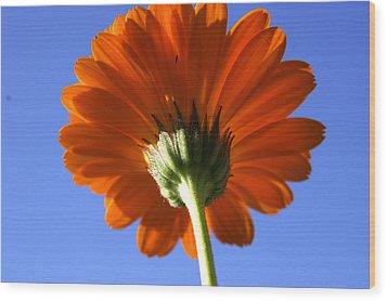 Orange Gerbera Flower Wood Print