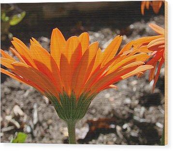 Orange Glory Wood Print
