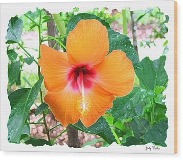 Orange Hibiscus Wood Print by Judy  Waller