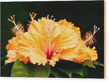 Orange Hibiscus Wood Print by Rob Tullis