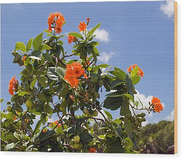Orange Hibiscus With Fruit On The Indian River In Florida Wood Print by Allan  Hughes