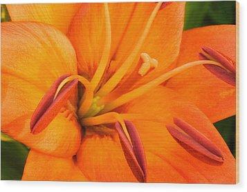 Orange II Wood Print by Amanda Kiplinger