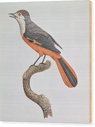 Orange Jay Wood Print by Jacques Barraband