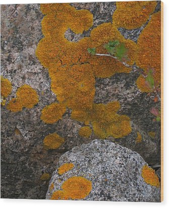 Wood Print featuring the photograph Orange Lichen On Granite by Mary Bedy