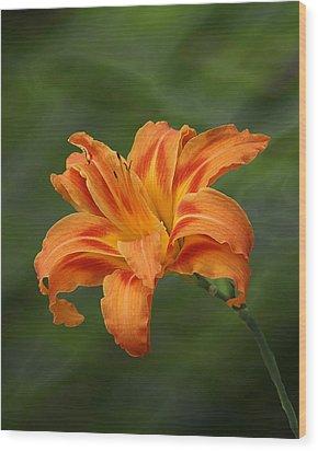 Orange Lilly Wood Print by Rick Friedle