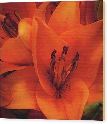 Orange Lily Wood Print by David Patterson