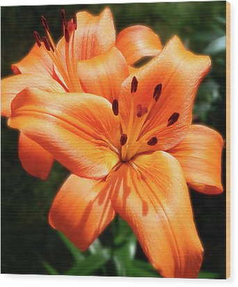 Orange Lily Joy Wood Print