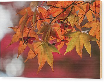 Wood Print featuring the photograph Orange Maple Leaves by Clare Bambers