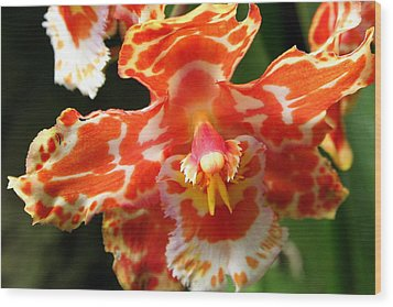 Orange Orchid Wood Print by Laurel Talabere