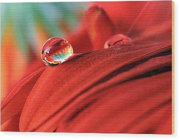 Orange Petals And Water Drops Wood Print by Angela Murdock