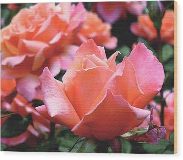 Orange-pink Roses  Wood Print by Rona Black