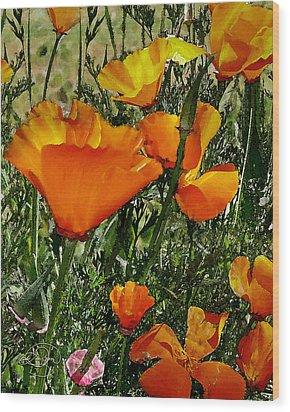 Orange Poppies Wood Print