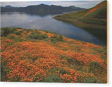 Orange Poppy Fields At Diamond Lake In California Wood Print by Jetson Nguyen