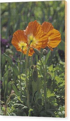 Orange Poppy Flower In The Dallas Wood Print by Richard Nowitz